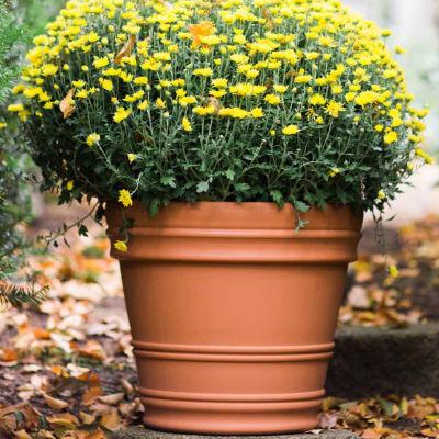 "Bloem Rolled Rim 16"" Planter"