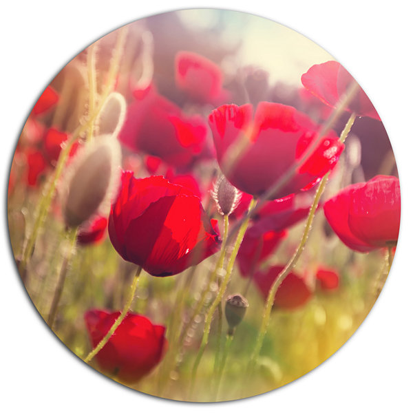 Designart Poppy Flowers Meadow in Sunlight LargeFlower Metal Circle Wall Art