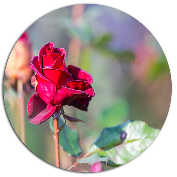 Designart Red Rose on Blurred Background Large Flower Metal Circle Wall Art