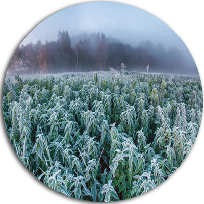 Designart Frozen Hemp Field in Autumn Morning Landscape Print Wall Artwork