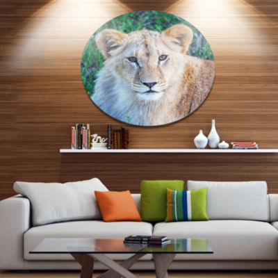 Designart Large Lion Relaxing in Forest African Metal Circle Wall Art Print