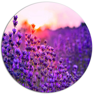 Designart Summer Sunset over Lavender Field FloralMetal Circle Wall Art