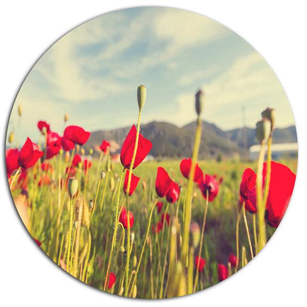 Designart Wild Red Poppy Flowers in Field Large Flower Oversized ...