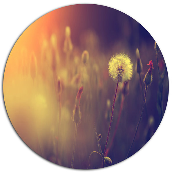 Designart Vintage Photo Of Dandelion Field Large Floral Metal Circle Wall Art
