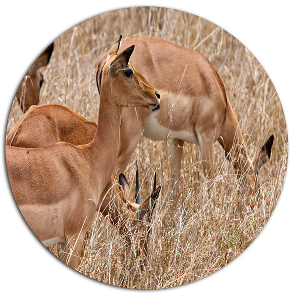 Designart Grants Gazelles Grazing in Grassland Animal Metal Circle Wall Art