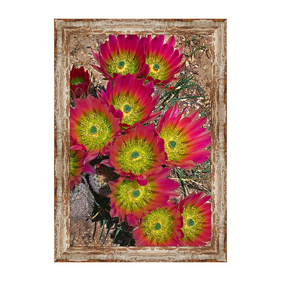 Lloyds Hedgehog Cactus Framed Canvas Art