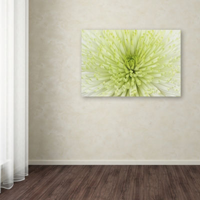 Trademark Fine Art Cora Niele Lime Light Spider Mum Giclee Canvas Art