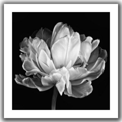 Tulipa Double Black and White II Canvas Poster