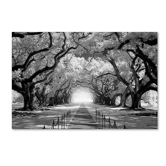 Trademark Fine Art Mike Jones Photo Oak Alley inf Check Giclee Canvas Art