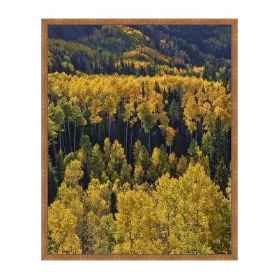 Autumn Aspens Framed Canvas Art