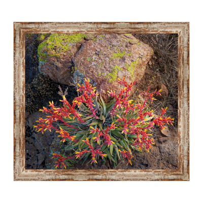 Rock Echeveria Framed Canvas Art