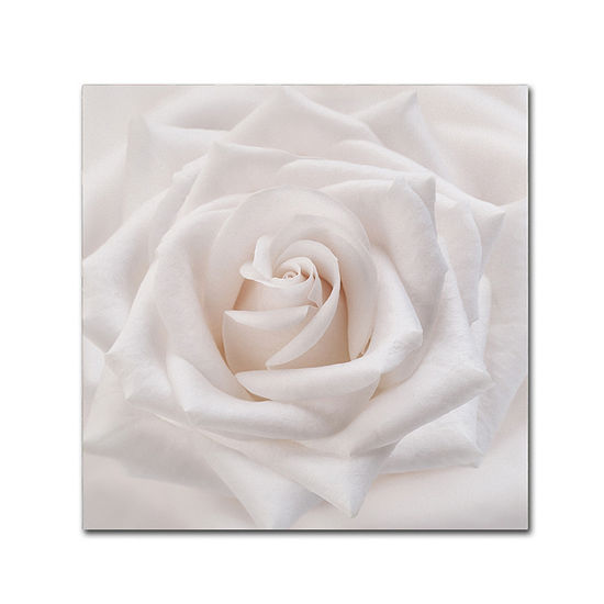 Trademark Fine Art Cora Niele Soft White Rose Giclee Canvas Art