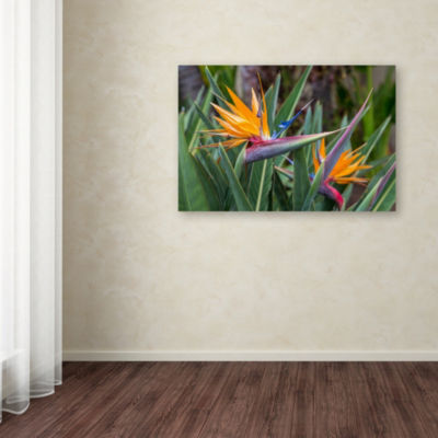 Trademark Fine Art Pierre Leclerc Two Birds of Paradise Giclee Canvas Art