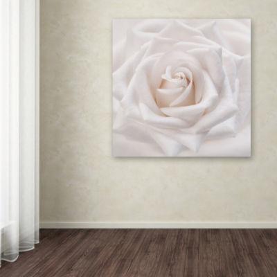 Trademark Fine Art Cora Niele Soft White Rose Giclee Canvas Art