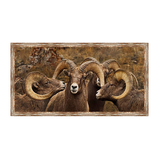 Big Horn Sheep Framed Canvas Art