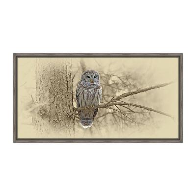 Barred Owl Framed Canvas Art