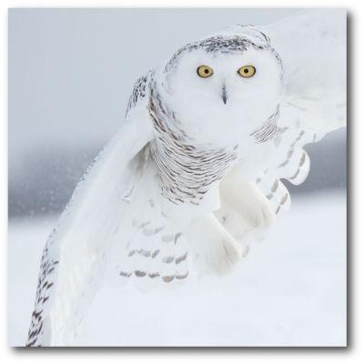 White Owl Canvas Art