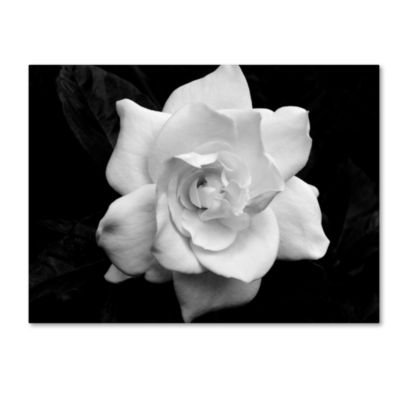Trademark Fine Art 'Gardenia in Black and White' by Kurt Shaffer Photographic Print on Wrapped Canvas Giclee Canvas Art
