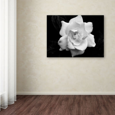 Trademark Fine Art Kurt Shaffer 'Gardenia in Blackand White' by Kurt Shaffer Giclée Photographic Print on Wrapped Canvas Giclee Canvas Art