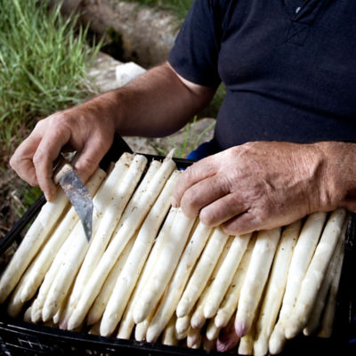 Organic White Asparagus Spears by Monjardin