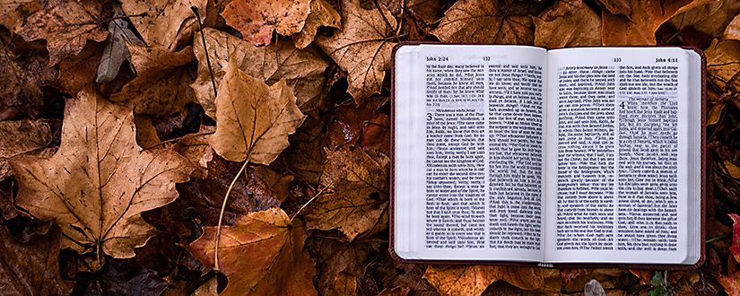 Bible open on a bed of leaves