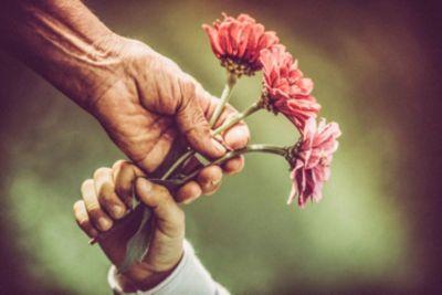 Thanksgiving, thankfulness, flowers