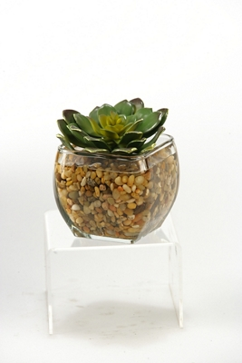 """Echeveria In Glass- 5""""H"""