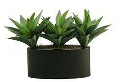 """Aloe Plants- 13""""H"""