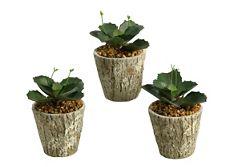 "Wild Succulents- 6.5""H"