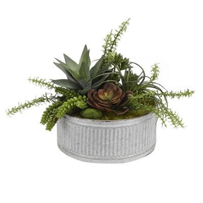 "Echeveria Aloe & Succulents- 16""H"