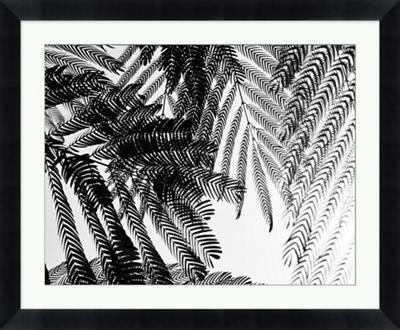 "Fernbrush Palm Framed Photography - 34""W x 28""H"
