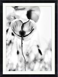 "Poppy Framed Photography Print - 36""W x 48""H"