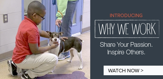 Introducing Why We Work – Share Your Passion. Inspire Others.