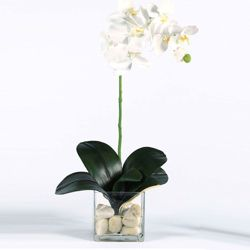 "Faux Phalaenopsis in Glass Container - 24""H"