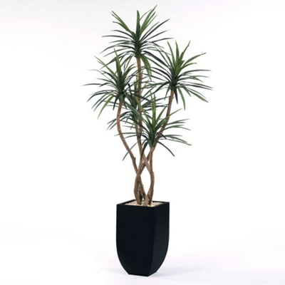 Yucca Tree in Metal Container - 8'H