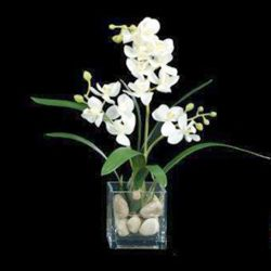 """Small Orchid In Cube - 17""""H"""