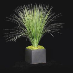 """Tall Grass in Black Cube - 29""""H"""
