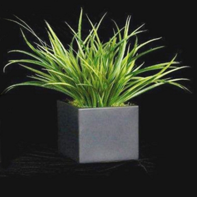 """Yucca Grass in Black Cube - 15""""H"""
