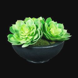 "Succulent Centerpiece - 10""H"