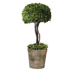 """Preserved Boxwood Single Sphere Topiary - 33""""H"""