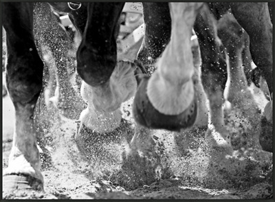 "Running Horses - 60""W x 44""H"