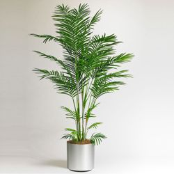 Potted Areca Palm Tree - 6 Ft.