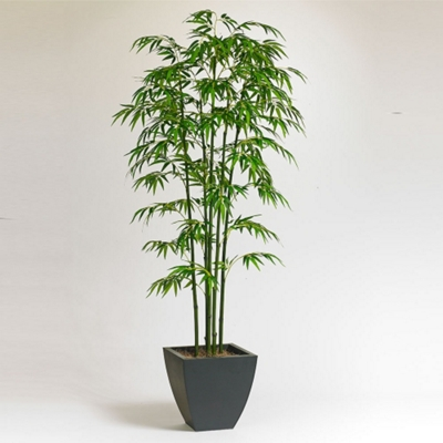Realistic Bamboo Tree For Office - 7 Ft.