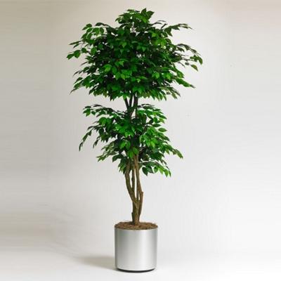 Realistic Indoor Ficus Tree - 7 Ft.
