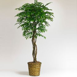 7 Foot Smilax Tree with Woven Pot