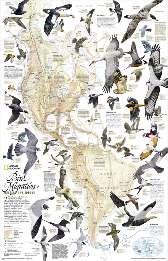 Bird Migration Western Hemisphere Wall Map National Geographic