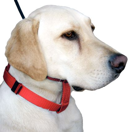 Dog Leash Training Cesar Millan