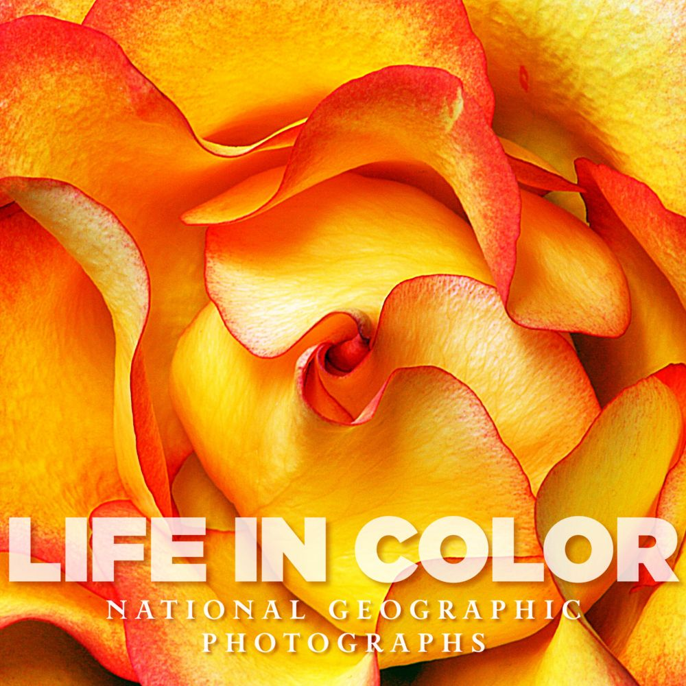 Life in color national geographic store Coloring book national bookstore