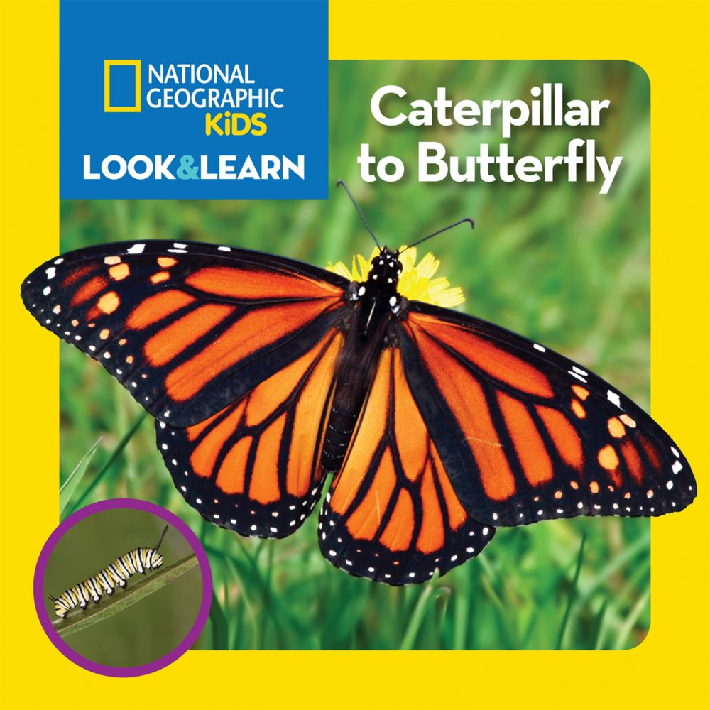 national geographic kids look and learn caterpillar to butterfly