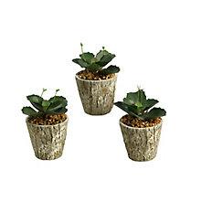 "6.5""H- Wild Succulents, 8822925"